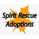 Spirit Rescue Adoptions