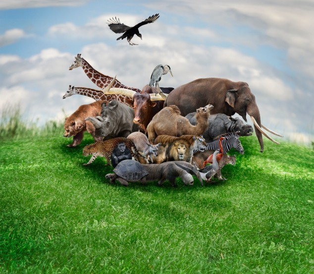 Spell for The Animal Kingdom - Bond With Animals Around You - Pets, Spirit Guides, Animal Totems, Nature