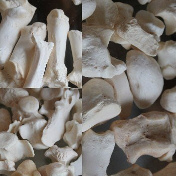 BONES :: IMBUED FOR DIFFERENT MAGICAL APPLICATION :: THE UNUSUAL IN YOUR COLLECTION