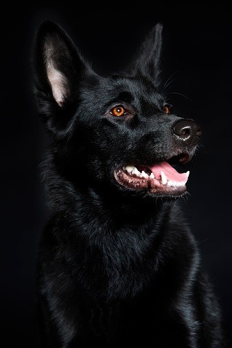 Hellhound Spirit Named Pazzi - Wickedly Funny, Loyal, Spiritual Connection