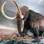 WOOLLY MAMMOTH :: EURASIAN CREATURE :: SPIRIT STONE