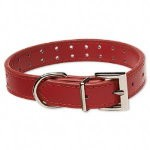 Pet Protection Collar - Large